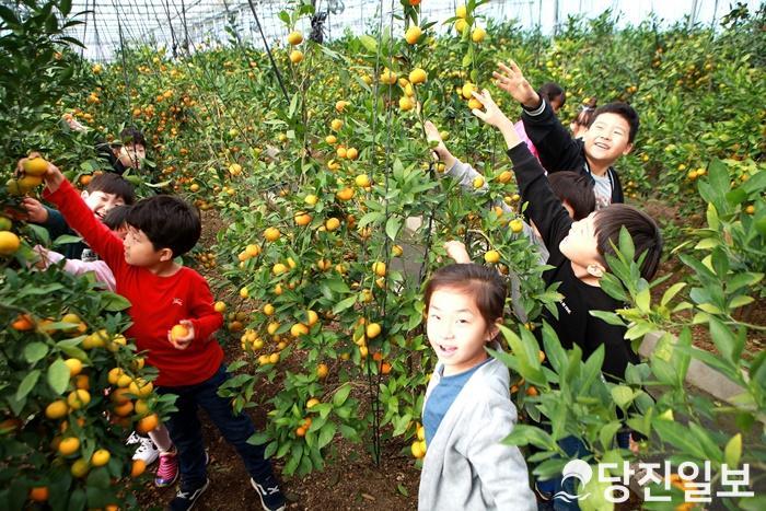 송산초 학생들의 허브하우스 귤체험 사진 (2).JPG