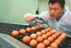 '계란에 꿈을 담다'...한솔양계 대표 황한솔 씨, 제24호 당찬 사람들 선정