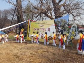 '면천은행나무 목신제' 개최
